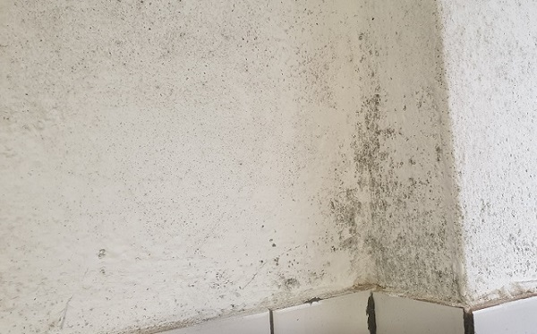 The reason you should get rid of mould as soon as possible